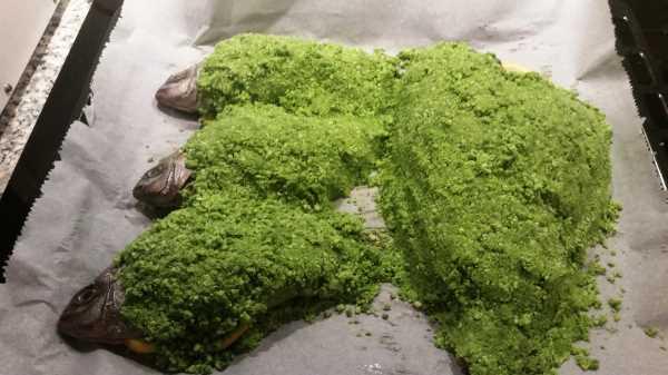 Dorade im Salzmantel - Sellerie Blättern und Meersalz