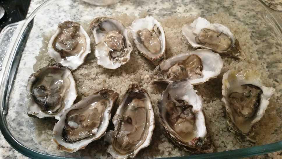 Austern auf groben Salz