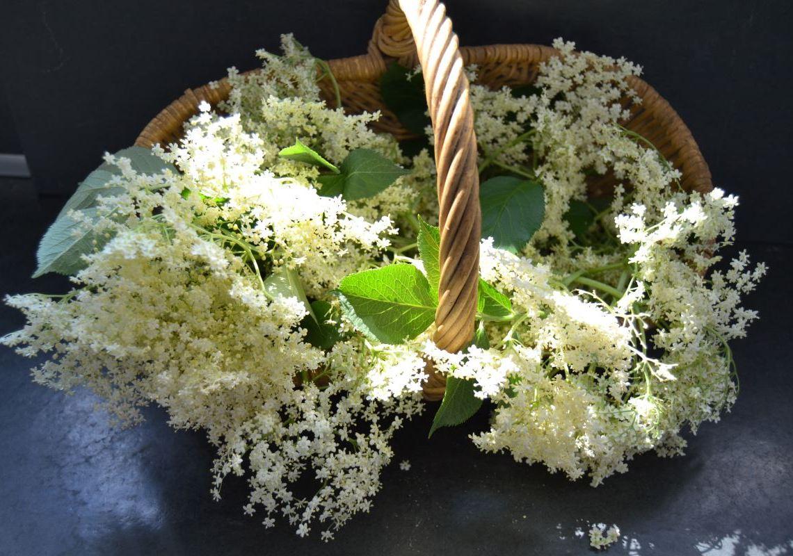 Holunderblüten für Holunderblütengelee